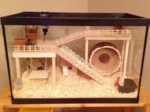 Acuarios para hamsters