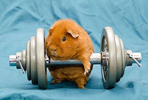 Orange Hamster Animal Sport Gym Home Decor Art Wall Poster 71 X 45 cm