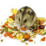 Qué comen los hamsters