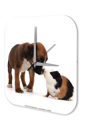 Reloj De Pared Cocina Marke Perro y hamster Plexiglas Imprimido 25x25 cm
