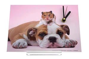 Reloj de escritorio Divertissement La ale Hámster Bulldog en la cabeza Decoración