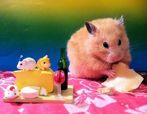 como cuidar un hamster