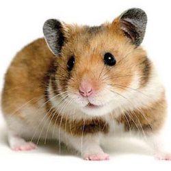 Hamstersweb.com