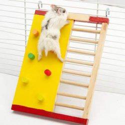 hodgea Hamster escalada escalera de madera pequeña mascota holandés Pig anti – Skid escalada planta deportes juguetes